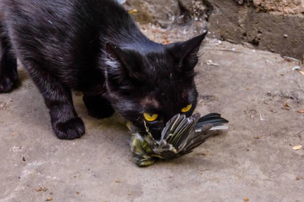 Un chat qui a attrapé un oiseau