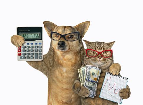 Mon chien me coûte de l'argent. Avoir un chat, c'est un budget.
