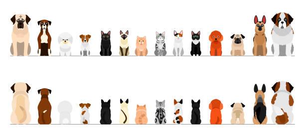 Différentes races de chiens et de chats